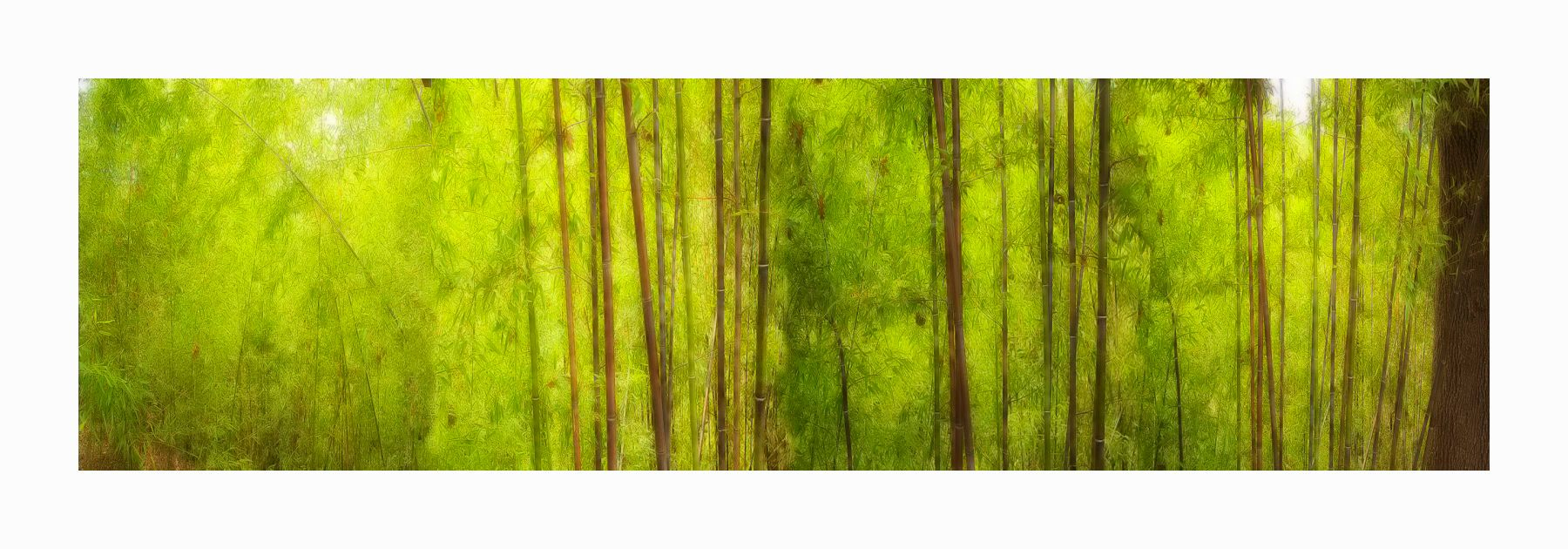 1bamboo_trees_40x14_border_color_2581