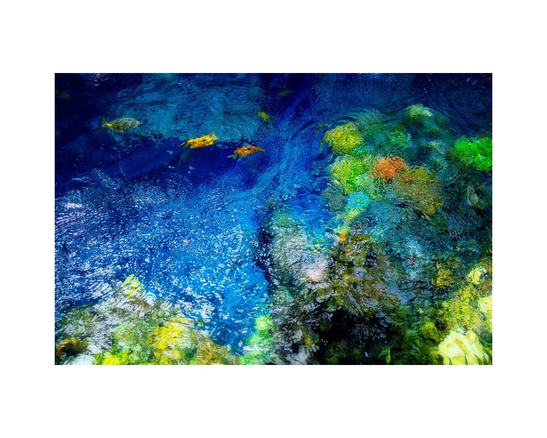 1r1_monet_s_garden_tide_pool_3_16x20_color