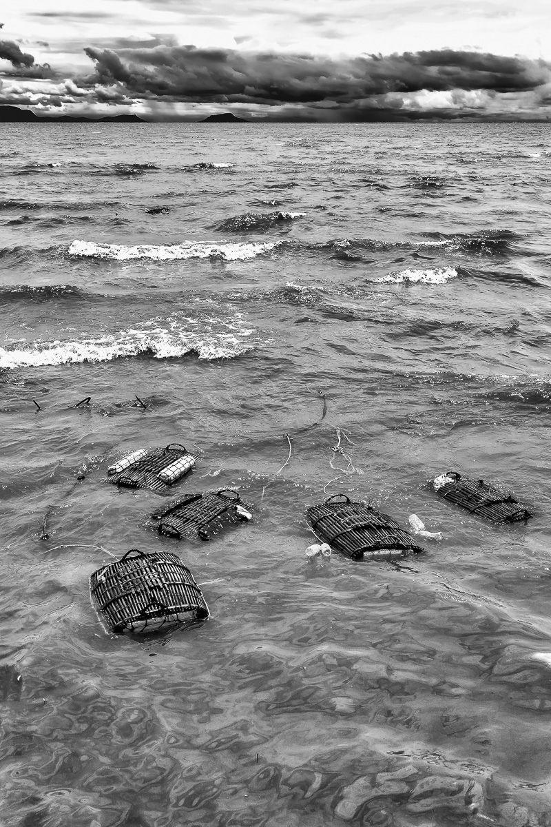 lady crabs 1_0229.jpg