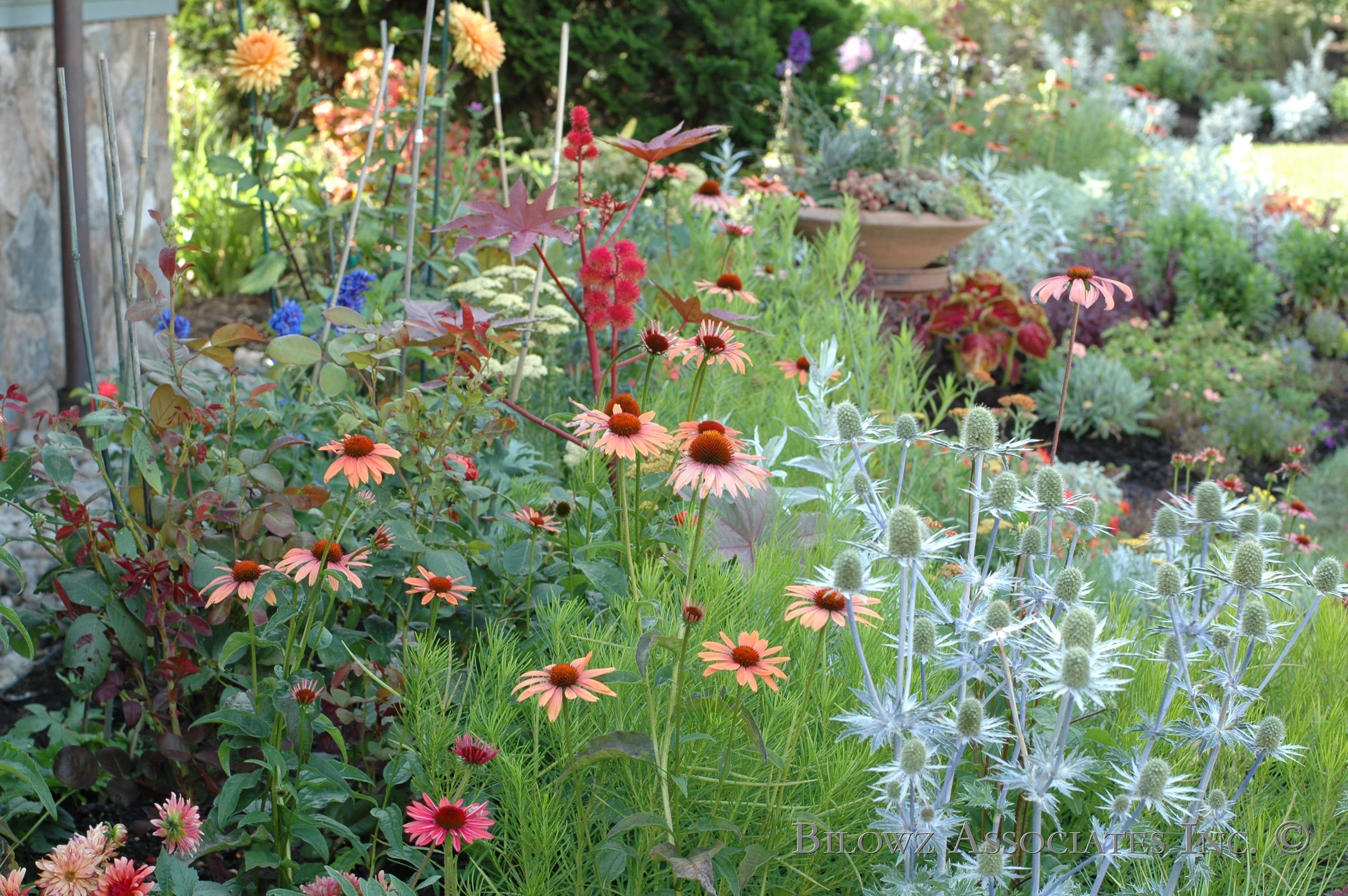 A Perennial Border popping with color - Image and design by Bilowz Associates Inc. Copyright.jpg