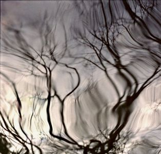 Water Branches