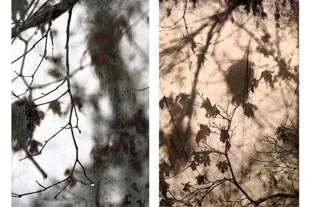 Leaves layered 1 & 2.jpg