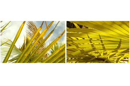 Palms, Key West