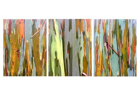 Australian Eucalyptus Bark, Costa Rica