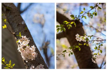 Hassie Nature dogwoods.jpg