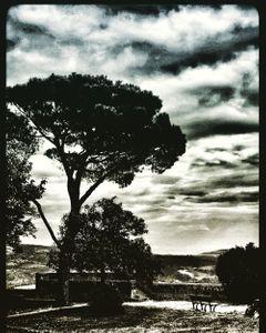 Italian Tree, Italy