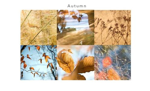 1autumn_leaves.jpg