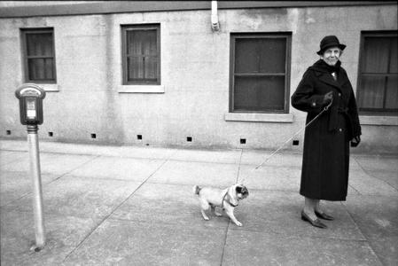 Walking Pug, Savannah, 1981