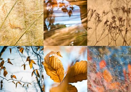 Autumn grouping copy.jpg