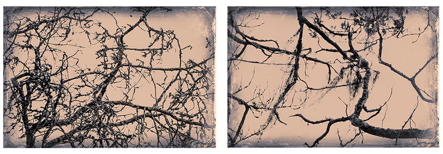 little st. simons branches.jpg