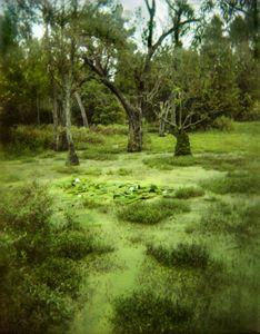 audubon swamp 5.jpg