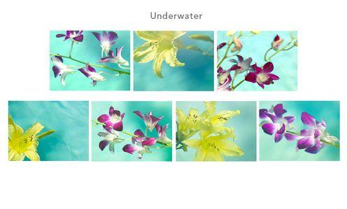 1lilies_underwater.jpg