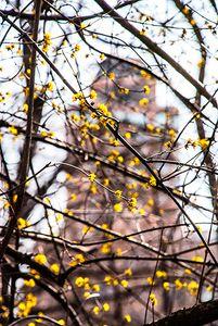 Spring, Central Park