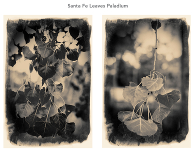Santa fe leaves.jpg