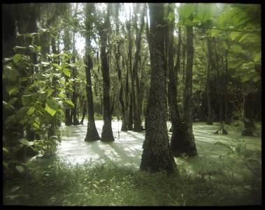 Audubon Swamp 2