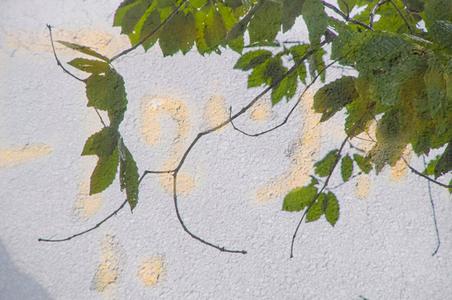 Flint Leaves Layered