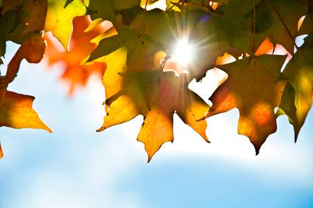 Fall Color.jpg