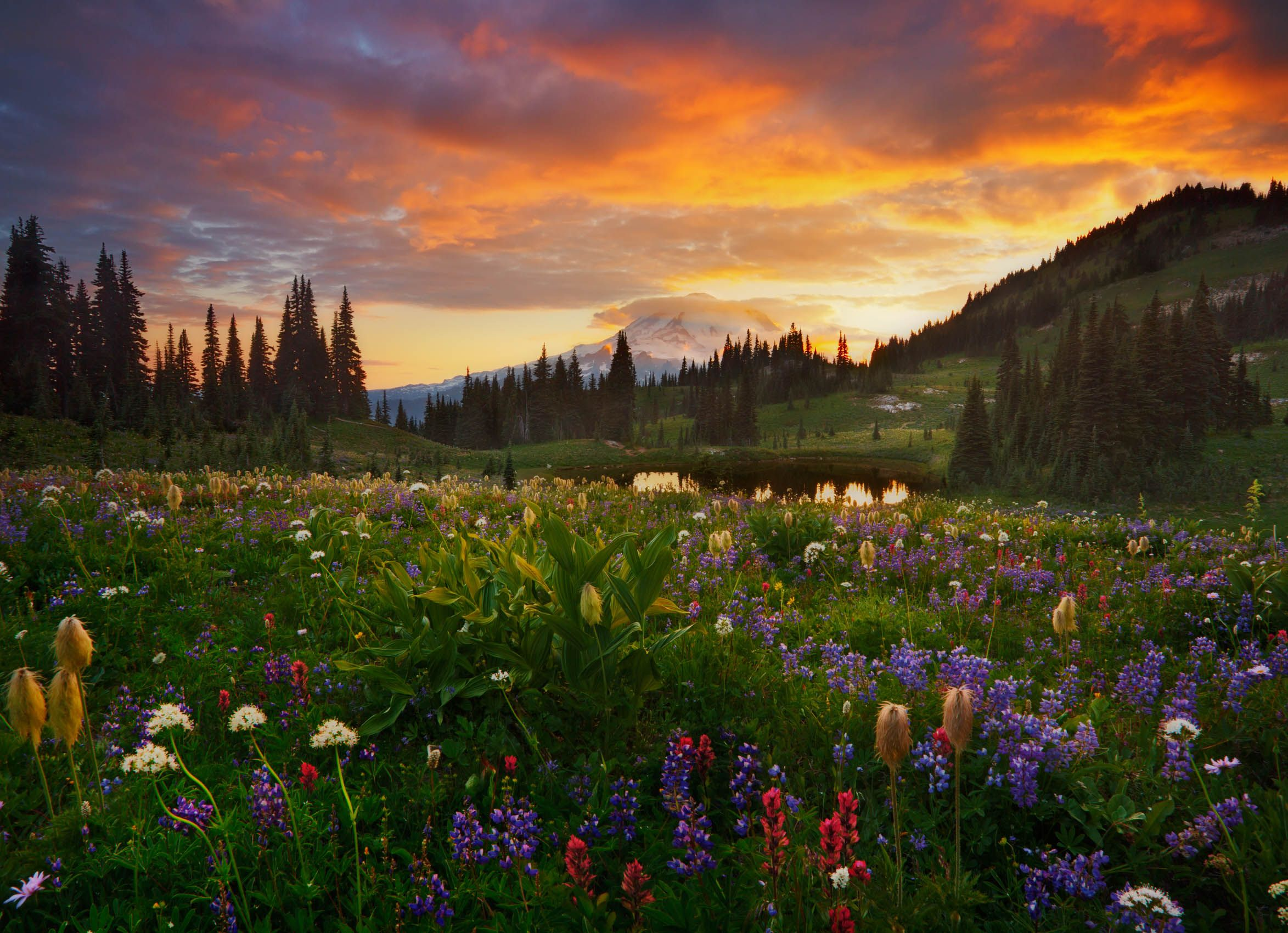 Wildflowers, Wild Light