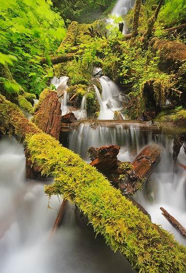 Rainforest Cascade, Mineral Falls (Vertical)