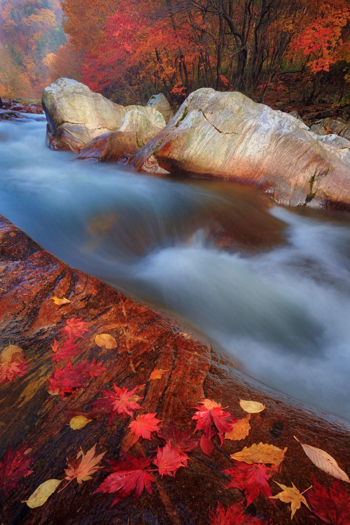 Color and Flow, Korean Autumn
