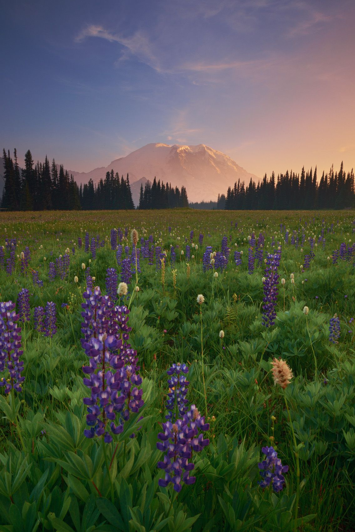 The Last Lupine