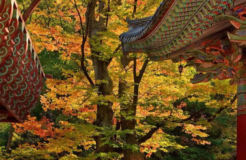 Autumn Maple and Temple Lines, TongDoSa