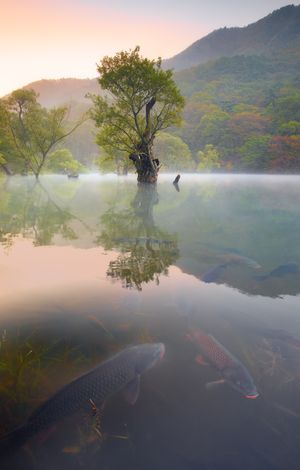 Early Autumn, JuSanJi