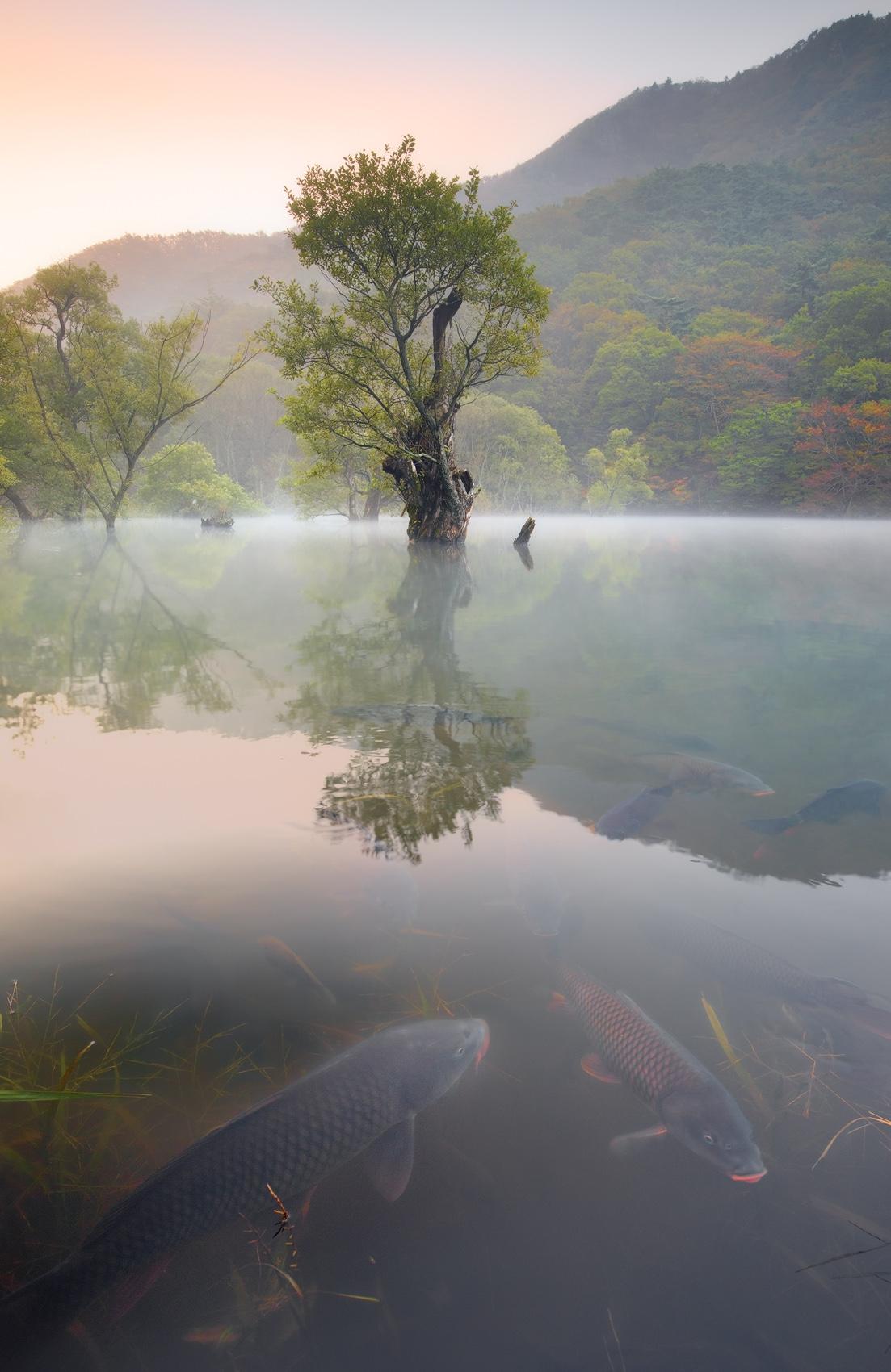 JuSanJi Autumn