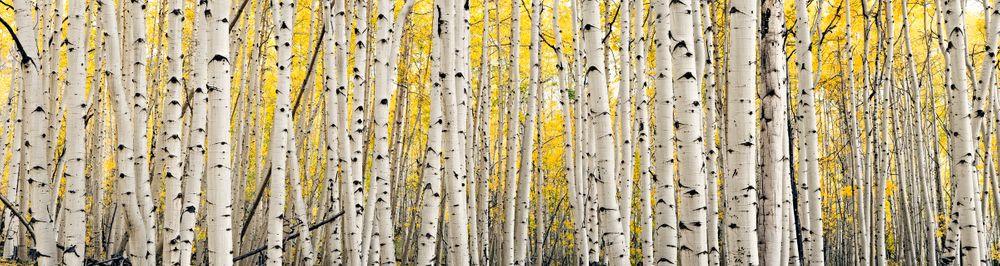 tree_pano.jpg