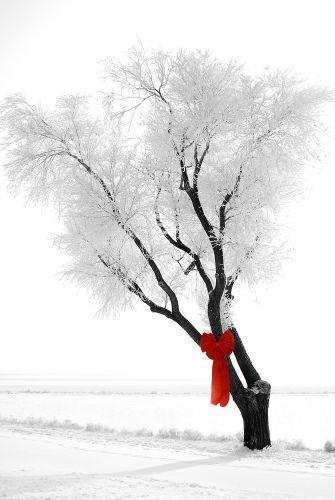 1ice_tree_bow.jpg