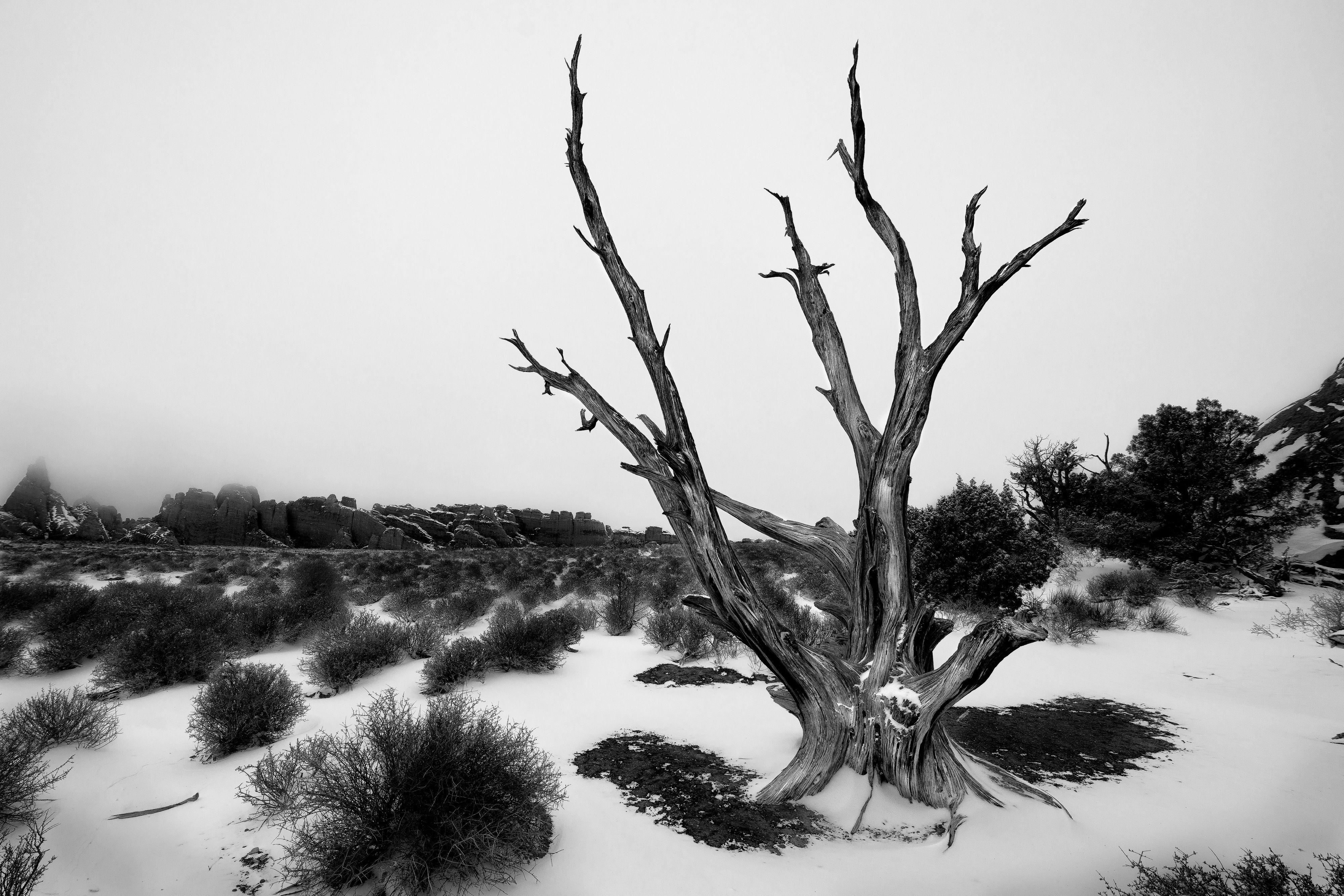 _KWC2560-tree.jpg