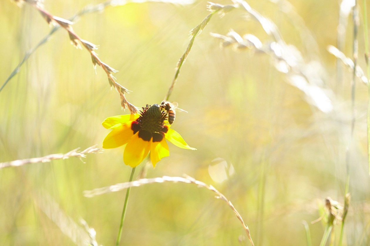 Flower-Skep_5-13-16-154.jpg