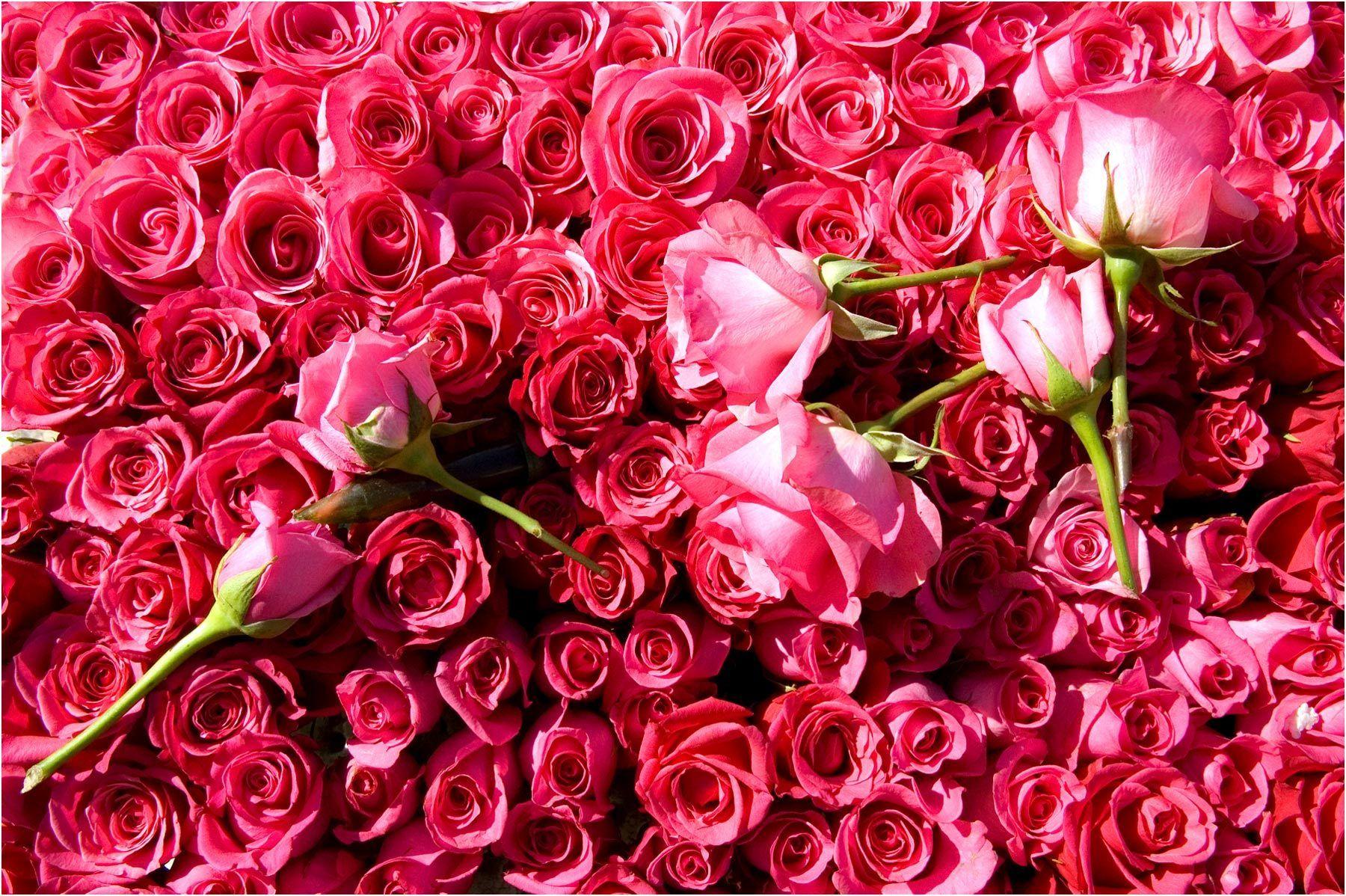 1flat_of_pink_roses.jpg
