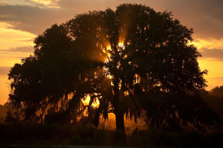 Fine Art Landscape Photography in Florida