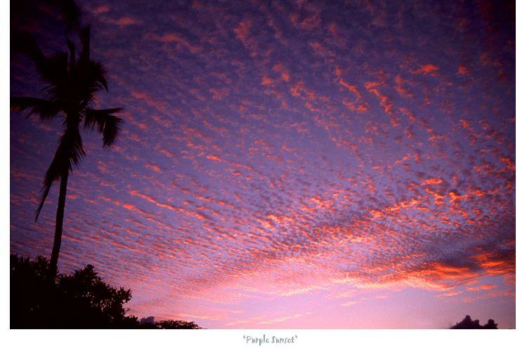1Purple_Sunset___web.jpg