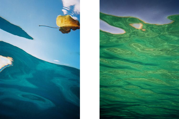 'Floating Leaf'     &    'Underwater Grace'