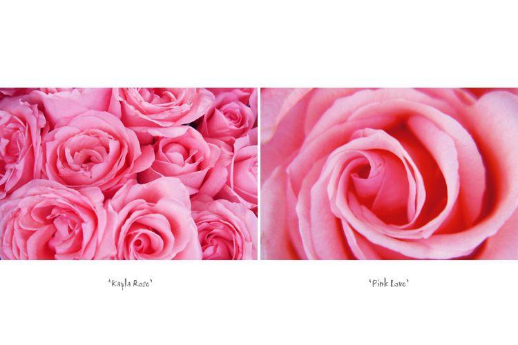 1Kayla_Rose___Pink_Love_for_.jpg