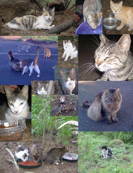 1feral_cats_live_books.jpg