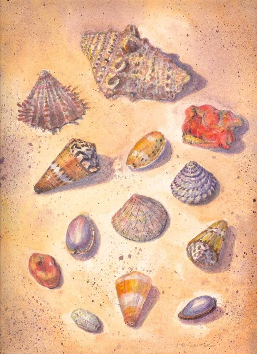 Seashells of Maui