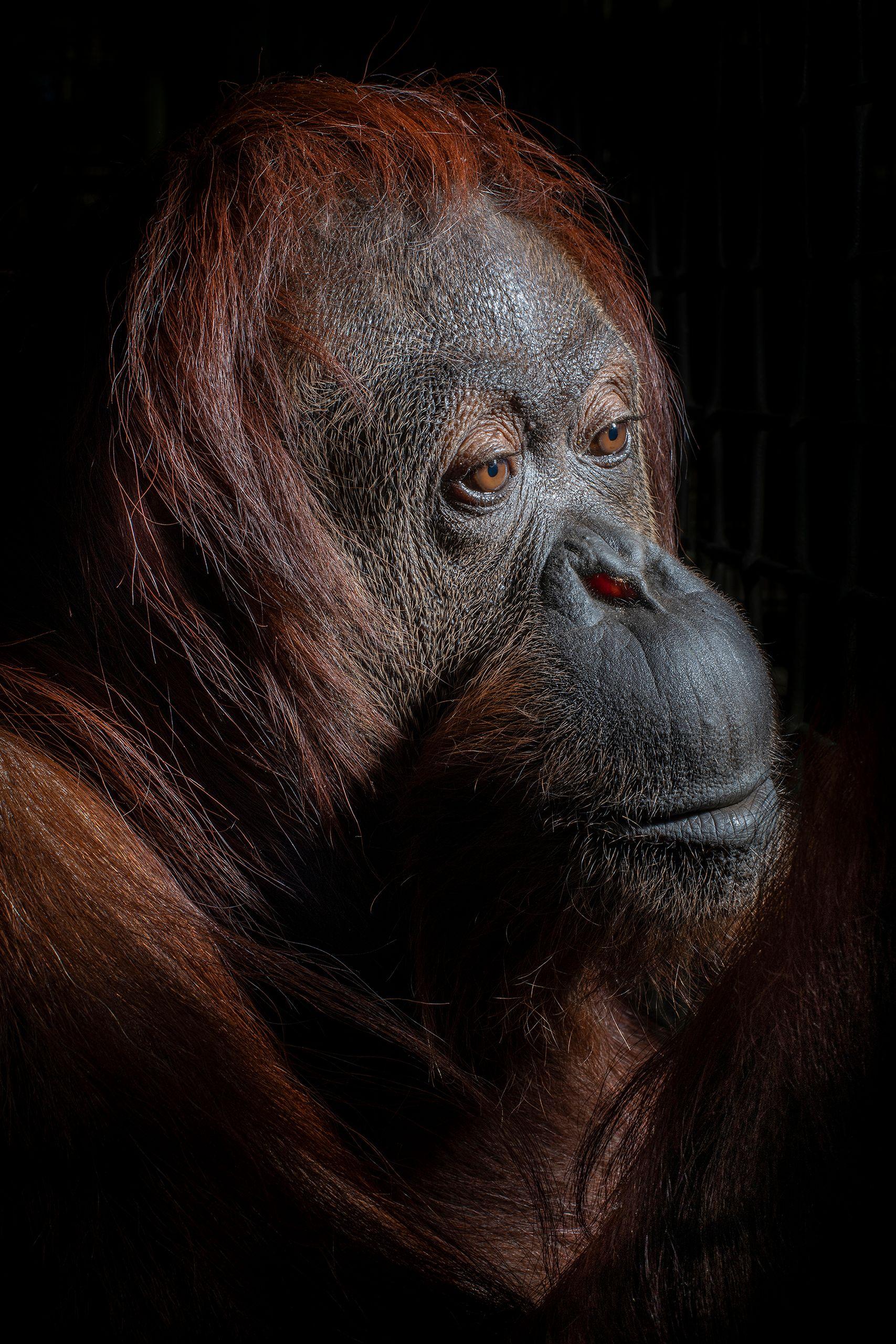 USA_FL_Center_Great_Apes_Sandra_6337_WEB.jpg