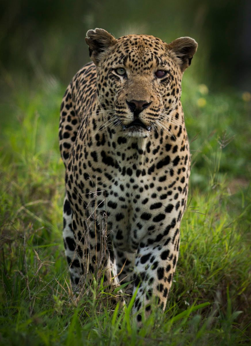 1so_africa_kruger_1641.jpg