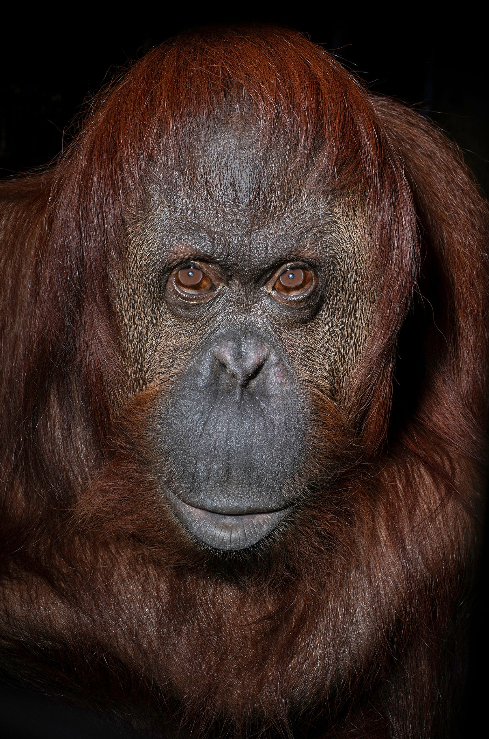 USA_FL_Center_Great_Apes_Sandra_6481_WEB.jpg