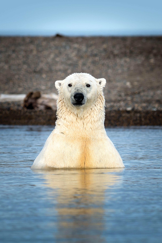 USA_Alaska_Kaktovik_0471.jpg