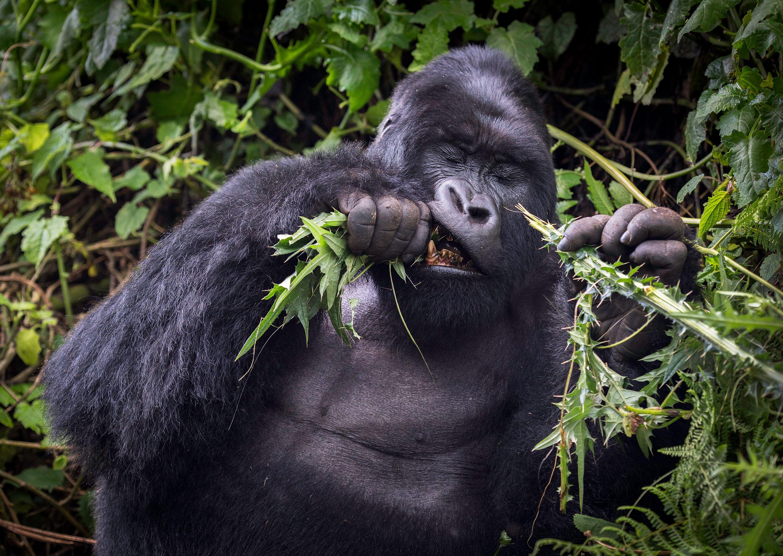 Rwanda_Volcanoes_National_Park_6364c.jpg