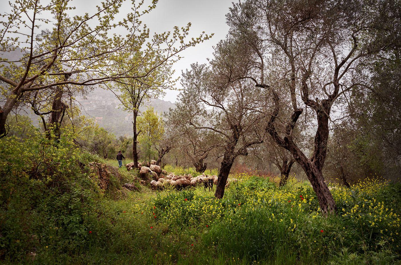 19 04 16 Spring in Moukthara valley 1 s.jpg
