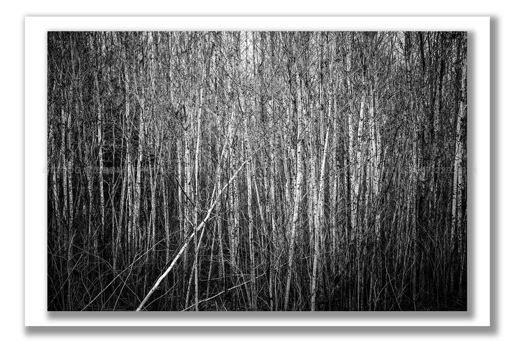 Thicket