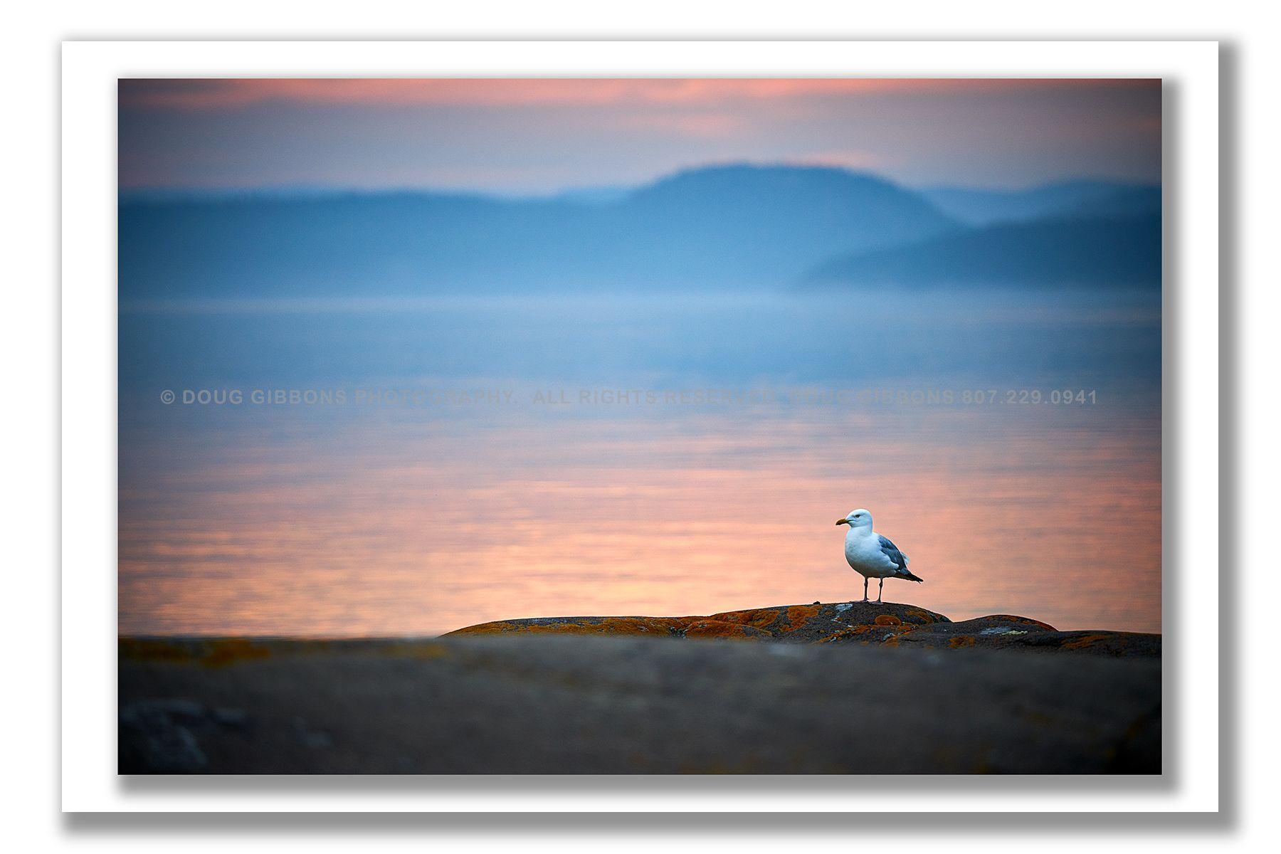 A Gulls Life
