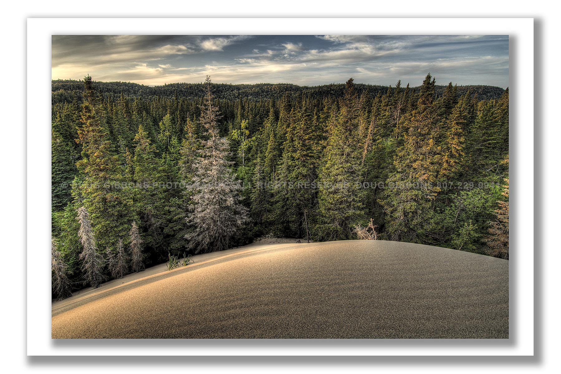 Pic Forest Dunes