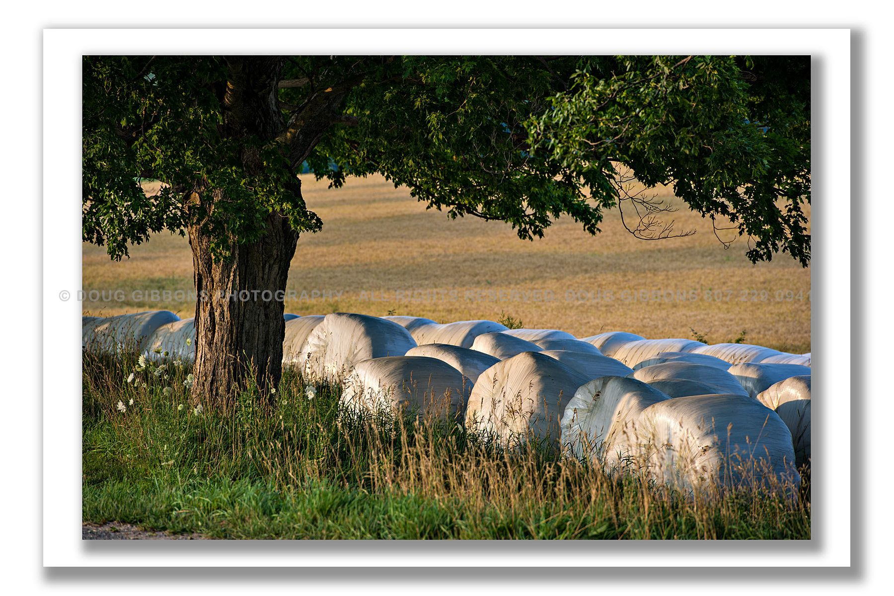 Days Harvest