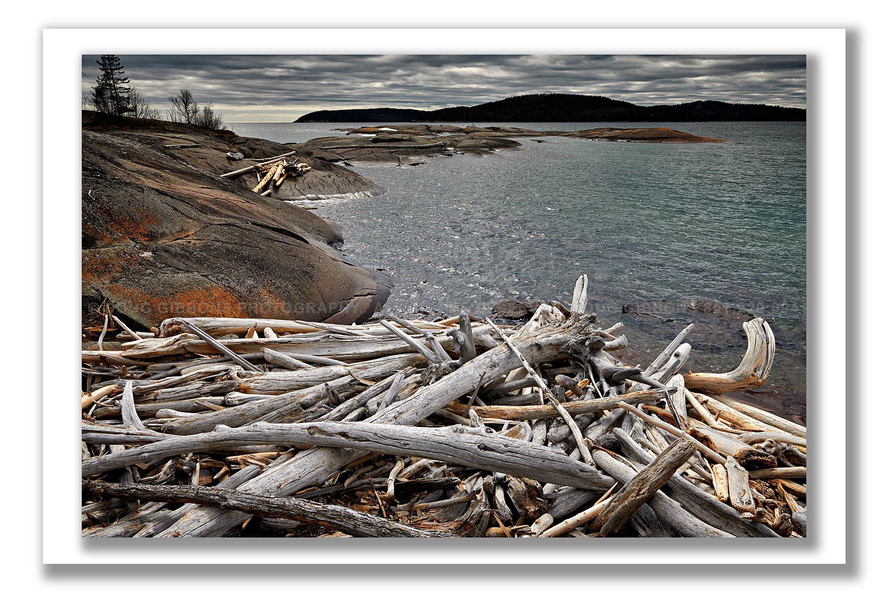 Driftwood Dilemma